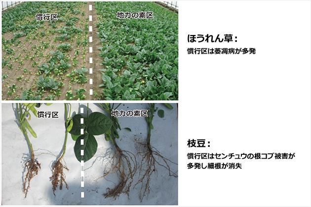 土壌を再生します